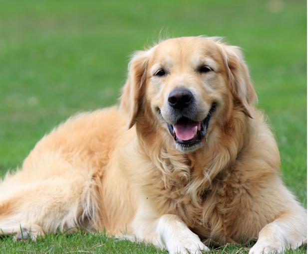 prevent dog disease